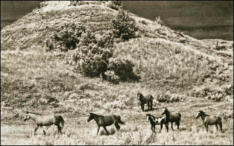 Mustangs, ND. 2012: 1/5