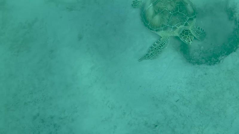Snorkeling St Thomas November 2018.mp4