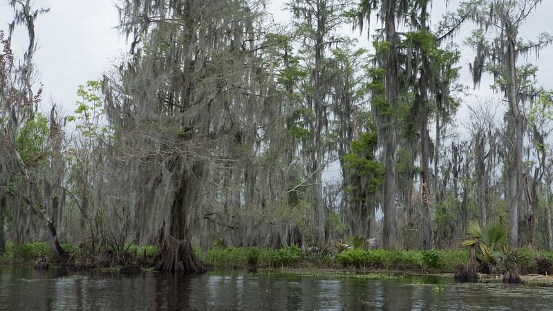 ManchacSwamp-6908.jpg
