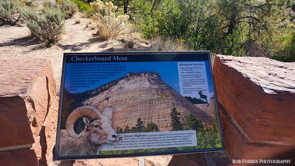 2019 Zion National Park