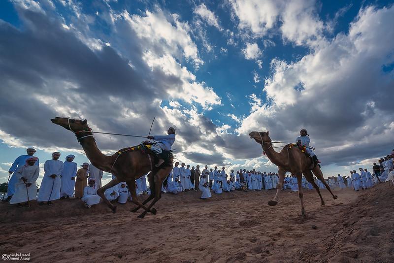 DSC08631-camels-Ibra.jpg