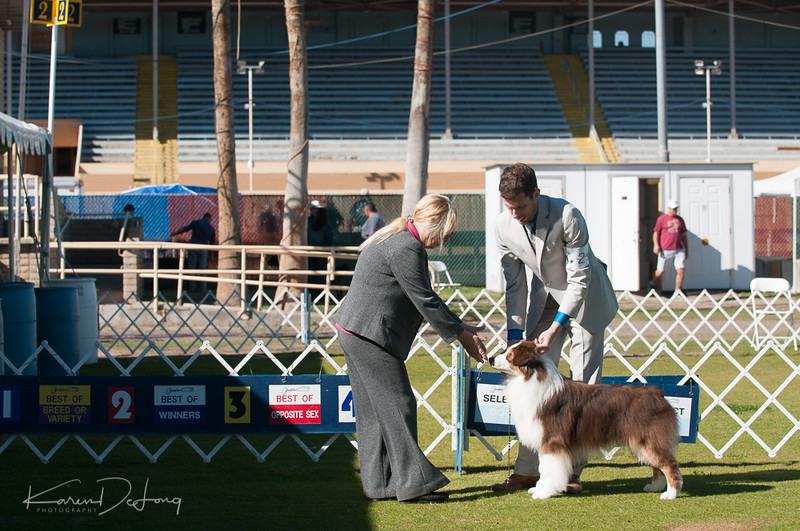 20170205_Australian Shepherds_Lost Dutchman Kennel Club-10.jpg