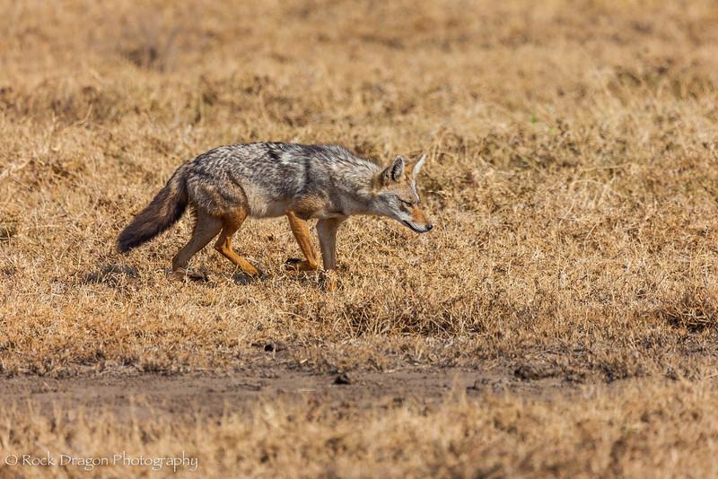 South_Serengeti-11.jpg