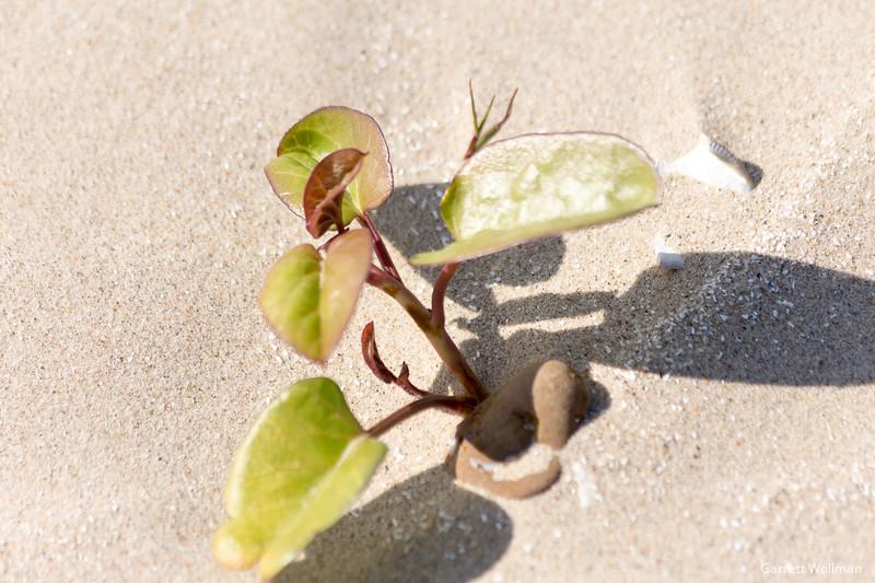 Crystal Beach-0830.jpg
