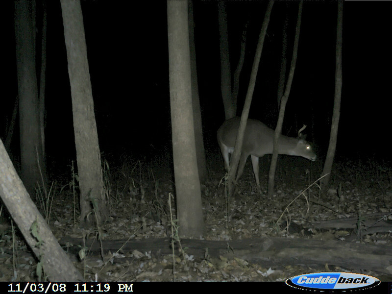 a buck, none the too worse for wear, checks it out