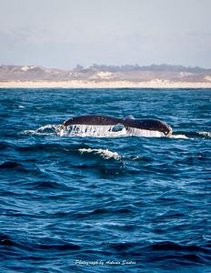 Monterey Santa Cruz