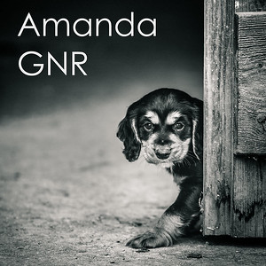 Amanda Northern Retrievers