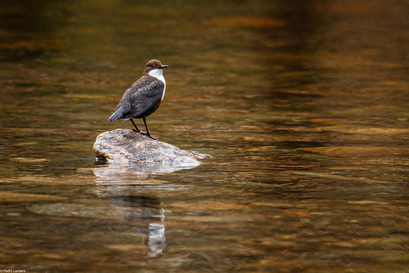 Dipper Reflection