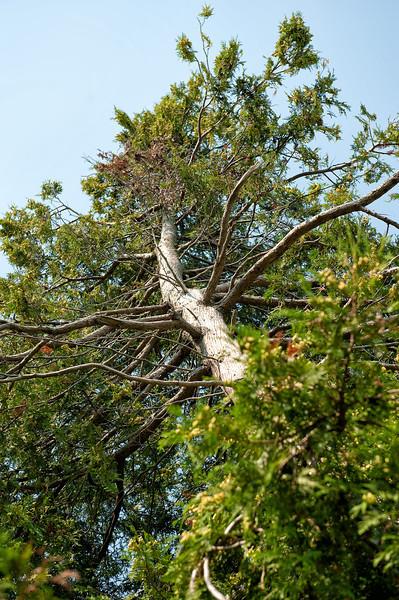 050 Michigan August 2013 - Grand Traverse Lighthouse Tree.jpg
