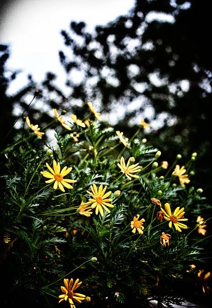 2011-PLamb_20111102-1119-Edit.jpg