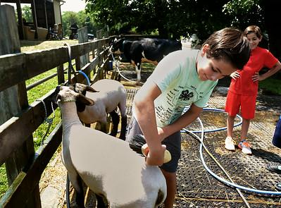 PHOTOS: Montgomery County 4-H Fair  2014