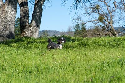 Coco at Holmes Park