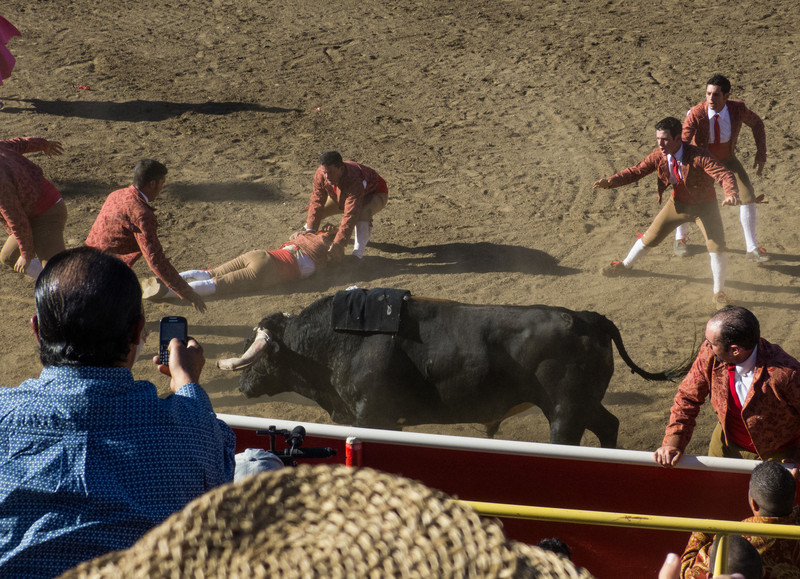 """High speed still sequence: (Last photo) The Forcados got for a FOURTH try of """"pega de cara"""" with the same bull."""