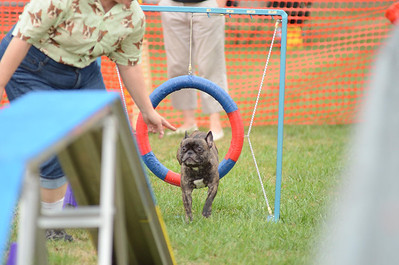 Capital Canine Dog Sports - September 1 & 2, 2012