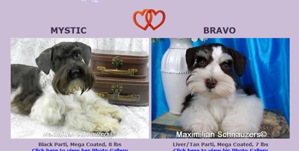 Mystic & Bravo's Puppies, DOB 12/12/2017