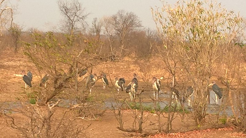 We arose early in the morning for a bird safari and saw many feathered animals small and large.
