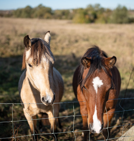 Horses in Spaldwick, Cambridgeshire