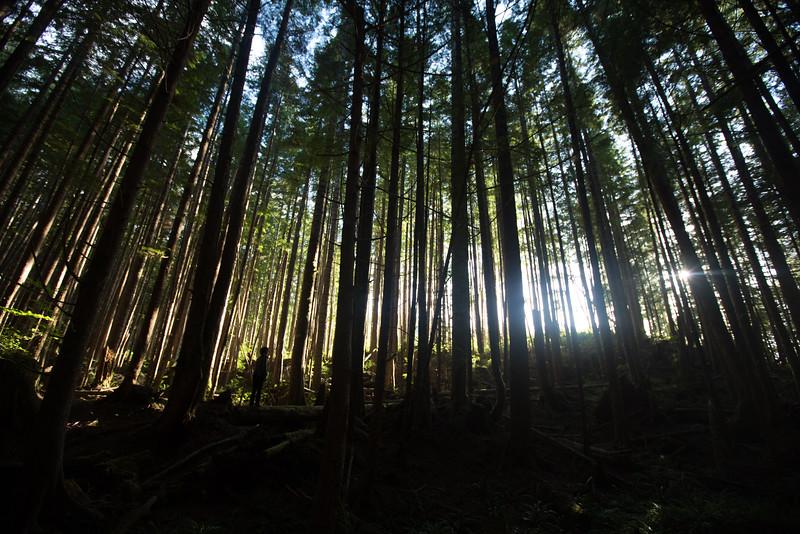 150913_Nikki_Forest_5652.jpg