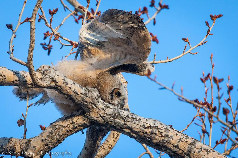 Owl-7.jpg