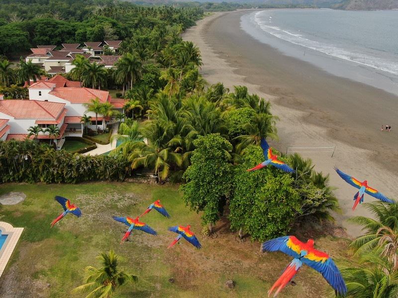 Flying with the Macaws