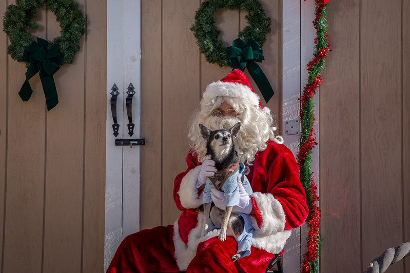 Pet Pictures With Santa-96.jpg