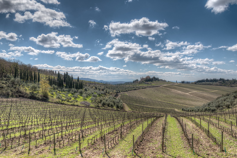 Vineyards - Gaiole in Chianti, Siena, Italy - April 6, 2015