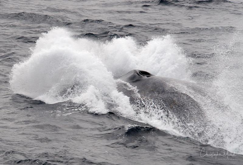 091203_blue_whale_6728.jpg