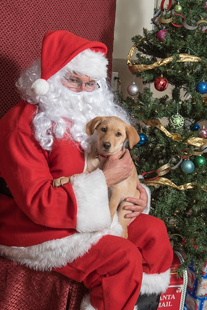2016 Cuyamaca Animal Hospital photos with Santa
