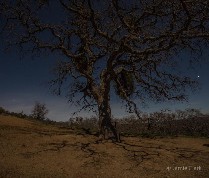 Moonlight on trees