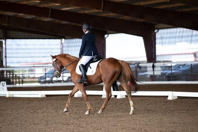 Horse 111