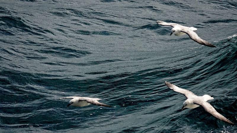 seagull 36.jpg