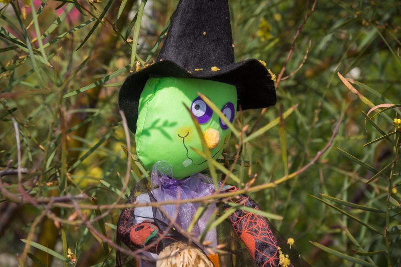 November 7 - Halloween witch.jpg