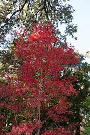 Zilker  Botanical Garden - Dec 2010