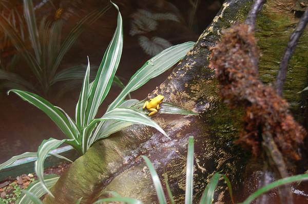 2006 Frog Exhibit