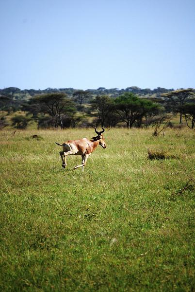 Serengeti (151).JPG