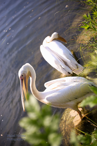 2016-07-17 Fort Wayne Zoo 094LR.jpg