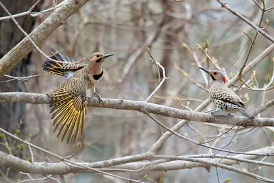 General Birds