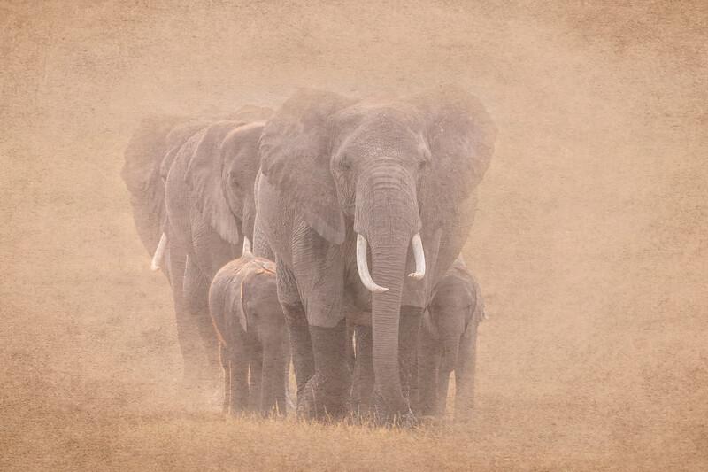 Elephants 9816b.jpg