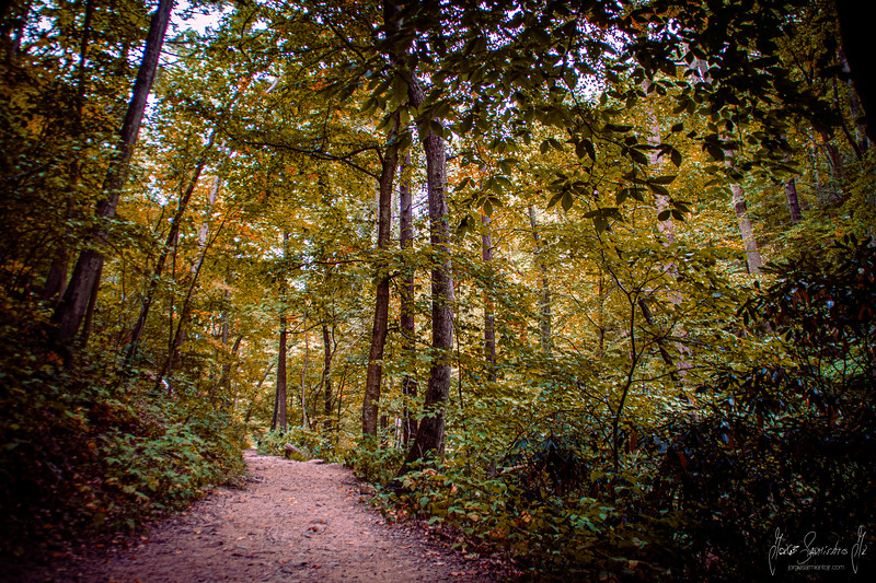 forest-walk-apalachian-trail-jorge-sarmiento-photo-video-new-jerseyIMG_7038.jpg