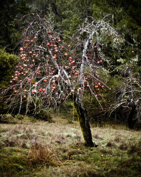 apple-trees-3.jpg
