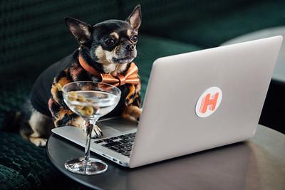 12/8/19 - Hotels.com - Canine Critic Campaign
