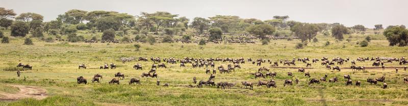Tanzania - Ndutu