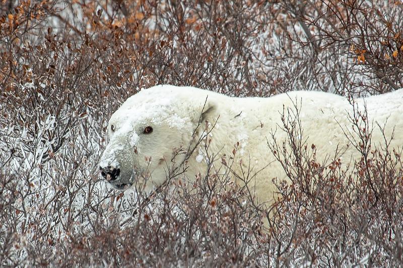 H First Bear.jpg