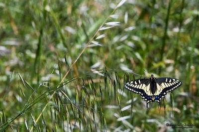 Butterflies, dragonflies.