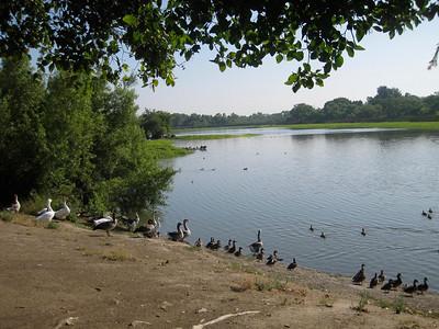 Machado Lake