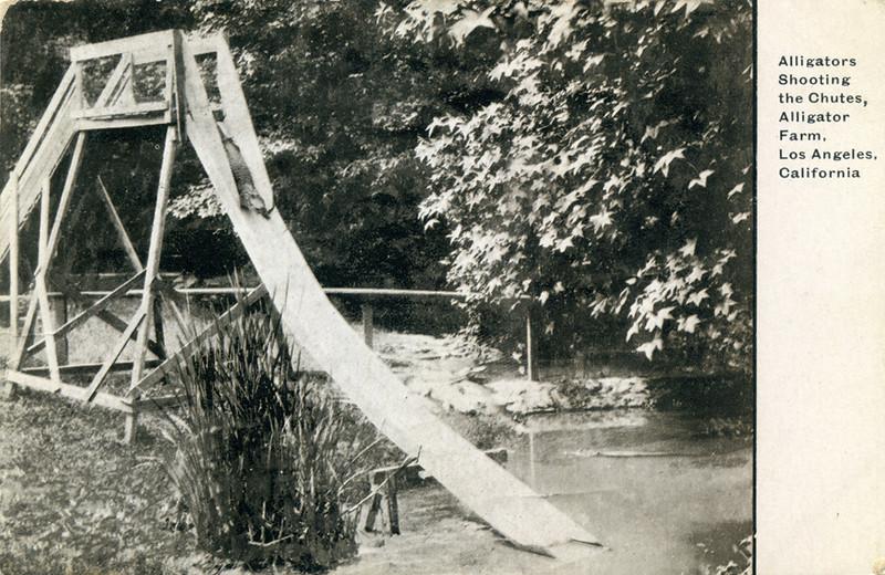 Alligator Slide