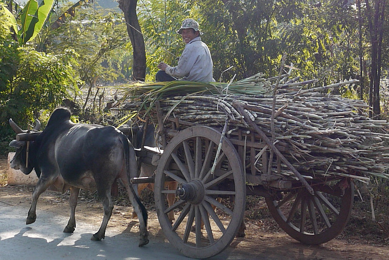 Ox carts, Inle Lake, Burma (Myanmar).