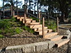 timber steps up mound