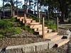 timber steps up mound