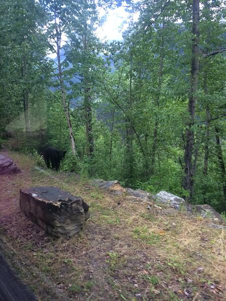 First bear sighting: from the GTTSR shuttle.